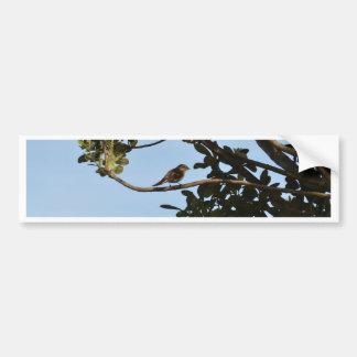 Chiffchaff Bumper Sticker