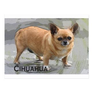 Chihuahua   チワワ  чихуахуа צ'יוואווה postcard