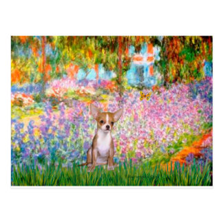 Chihuahua 1 - Garden Postcard