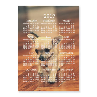 Chihuahua 2019 Calendar Photo Magnetic Card 5x7