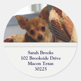 Chihuahua Address Stickers