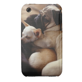 Chihuahua and Pug sleeping, close-up iPhone 3 Cover