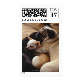 Chihuahua and Pug sleeping, close-up Postage Stamp
