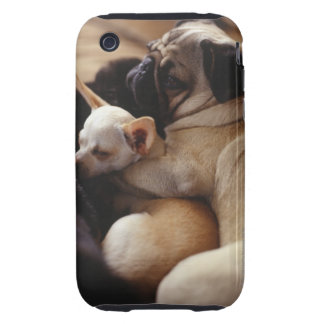 Chihuahua and Pug sleeping, close-up Tough iPhone 3 Cases