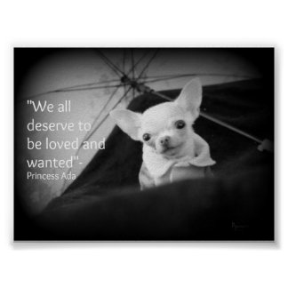 Chihuahua appreciation poster