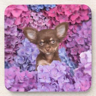 Chihuahua between flowers drink coaster