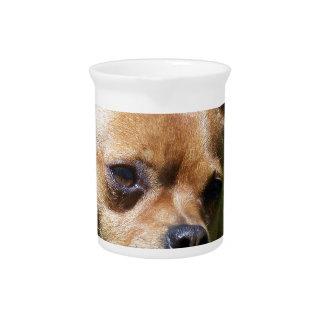 Chihuahua Beverage Pitcher