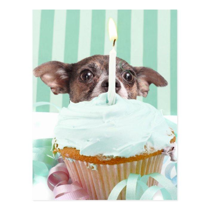 Cool Chihuahua Birthday Cake Postcard Zazzle Com Funny Birthday Cards Online Unhofree Goldxyz