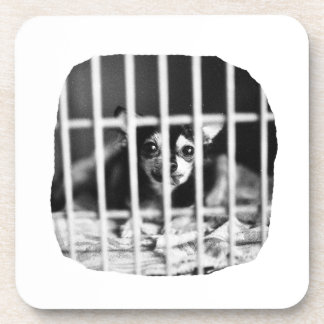 chihuahua Black and White Behind cage Bars Coasters