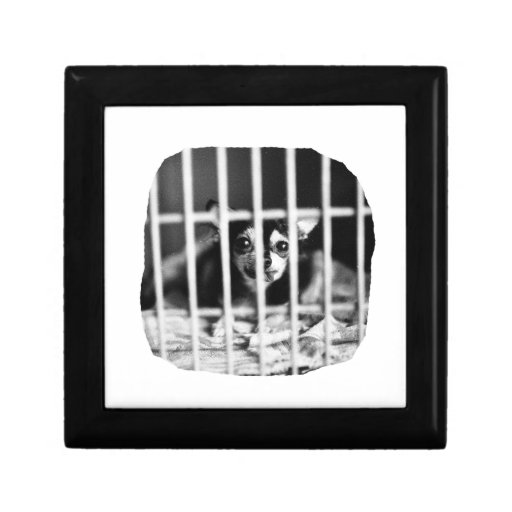 chihuahua Black and White Behind cage Bars Gift Boxes