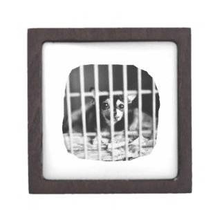 chihuahua Black and White Behind cage Bars Jewelry Box