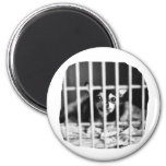 chihuahua Black and White Behind cage Bars Magnet