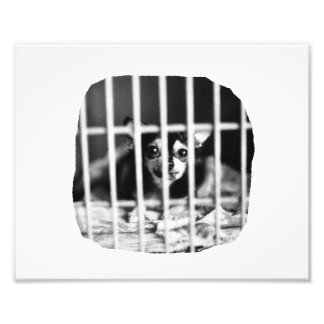 chihuahua Black and White Behind cage Bars Photo Print