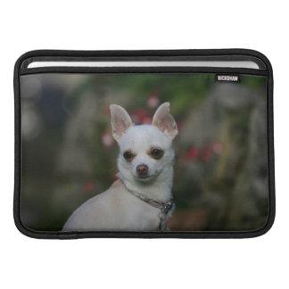 Chihuahua blanca fundas MacBook