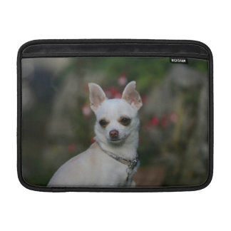 Chihuahua blanca funda para macbook air