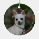 Chihuahua blanca ornamentos de reyes magos