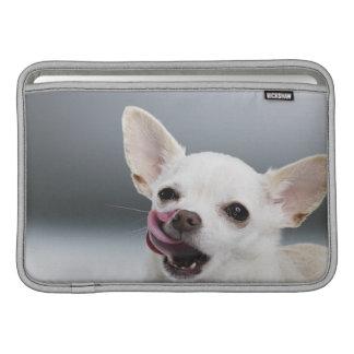 Chihuahua blanca que lame los labios fundas para macbook air