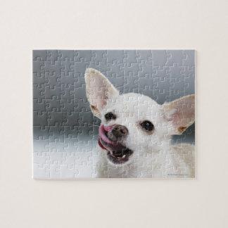 Chihuahua blanca que lame los labios puzzle