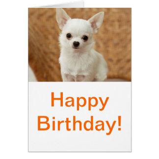 Chihuahua blanca felicitaciones