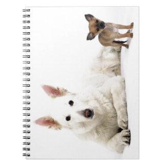 Chihuahua blanca y perro pastor miran a más no pod libro de apuntes con espiral