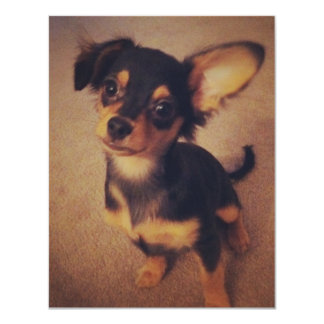 Chihuahua blank invitation
