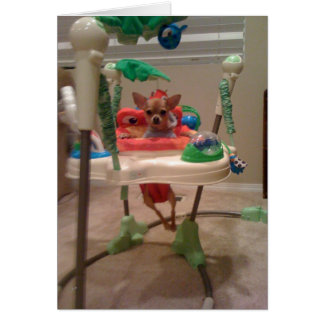chihuahua bouncy chair card