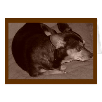 Chihuahua Stationery Note Card