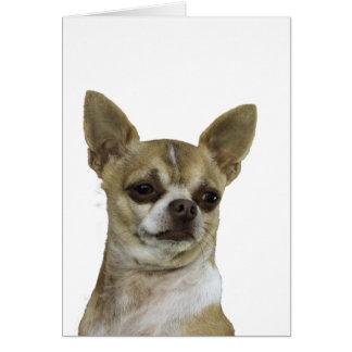 Chihuahua con actitud felicitaciones