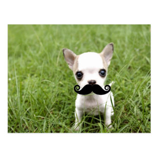 Chihuahua con el bigote divertido en jardín postal