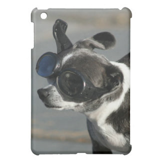 Chihuahua con la caja de la mota del ipad de las g