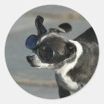 Chihuahua con los pegatinas de las gafas pegatina redonda