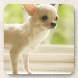 Chihuahua Beverage Coaster