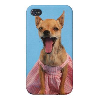 chihuahua de la princesa en la cubierta del caso d iPhone 4 funda