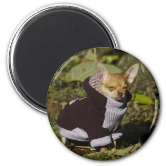 Chihuahua de lujo imán redondo 5 cm