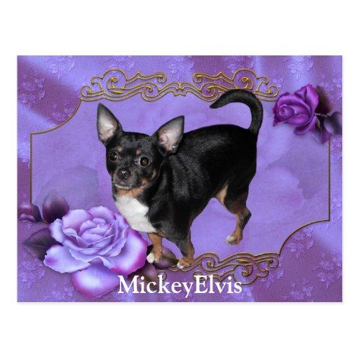 Chihuahua de MickeyElvis Postales
