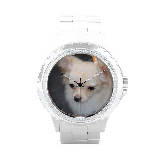 Chihuahua de pelo largo relojes de pulsera