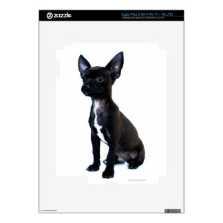 Chihuahua Decals For iPad 3