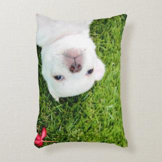 chihuahua decorative pillow