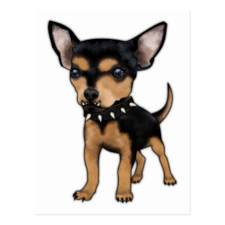 Chihuahua del asesino postales