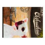 Chihuahua del café postal