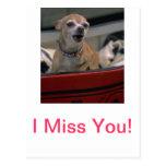 Chihuahua del descortezamiento postales
