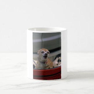 Chihuahua del descortezamiento taza