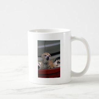 Chihuahua del descortezamiento tazas