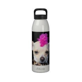 Chihuahua del eje de balancín punky botellas de agua reutilizables