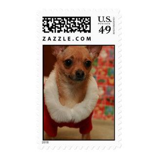 Chihuahua del navidad envio