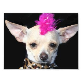 Chihuahua del punk rock impresion fotografica