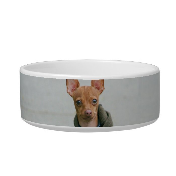 Chihuahua dog bowl