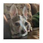 """Chihuahua Dog Ceramic Tile<br><div class=""""desc"""">A ceramic tile of a Chihuahua dog.  If you believe the cost and shipping is too much to pay. Join Zazzle Black at check out to get unlimited free shipping,  huge discounts and great exclusives all year long. A standard membership is $9.99 annually.</div>"""