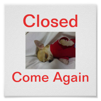 Chihuahua Dog Closed Sign Sleeping