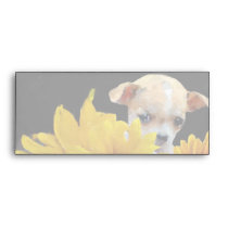 Chihuahua dog in sunflowers envelope